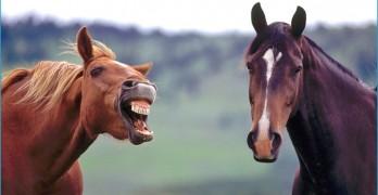 Minnov8 Gang 296 – Too Many Horses!